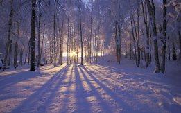 winter-forest-sunset