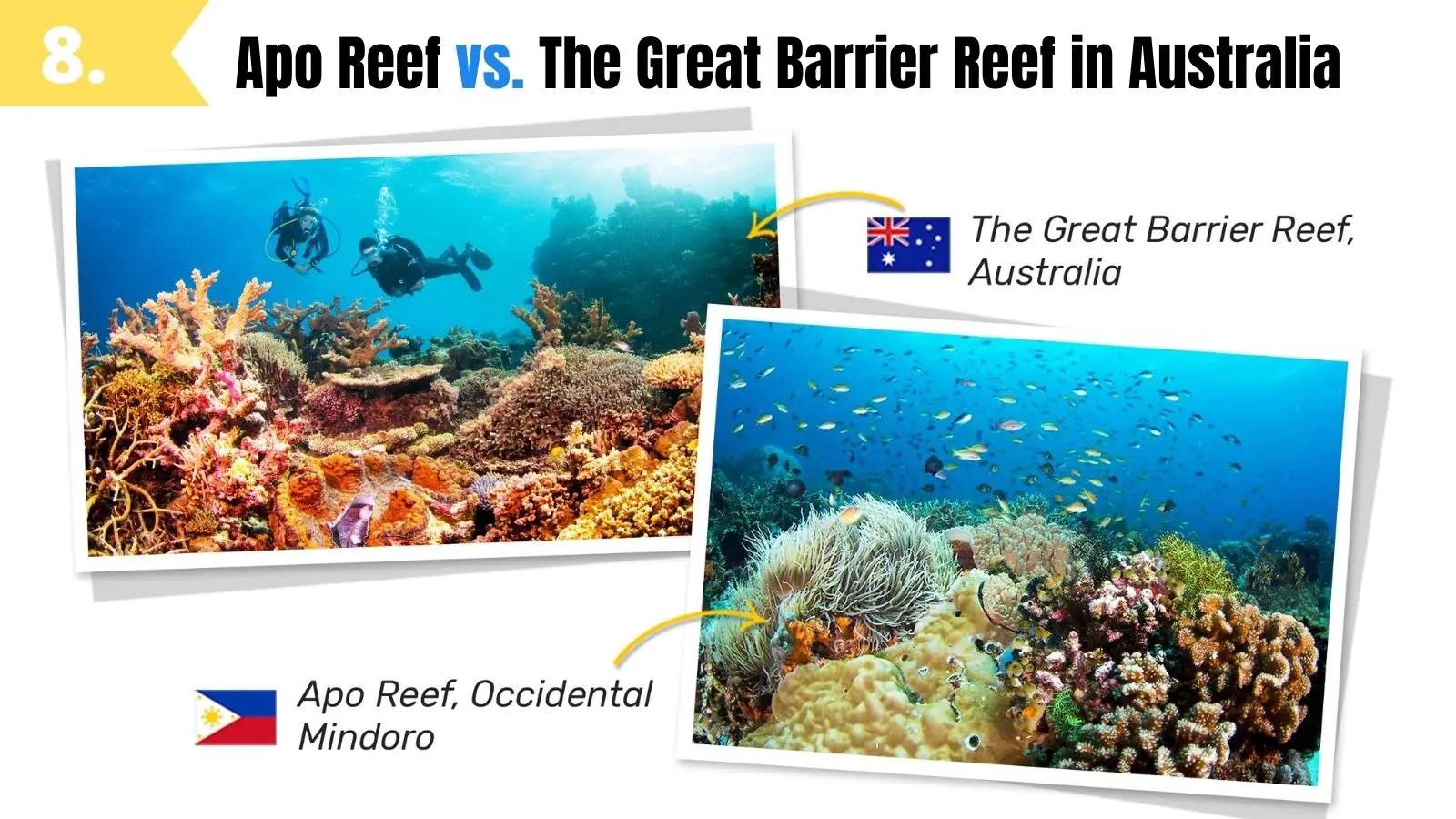 apo reef looks like the great barrier reef australia