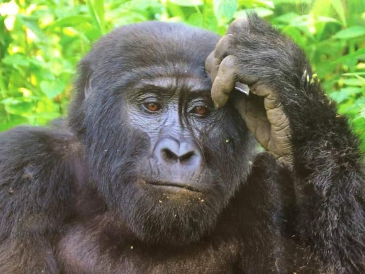 charlie uganda
