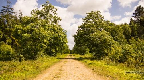 Blean Woodland