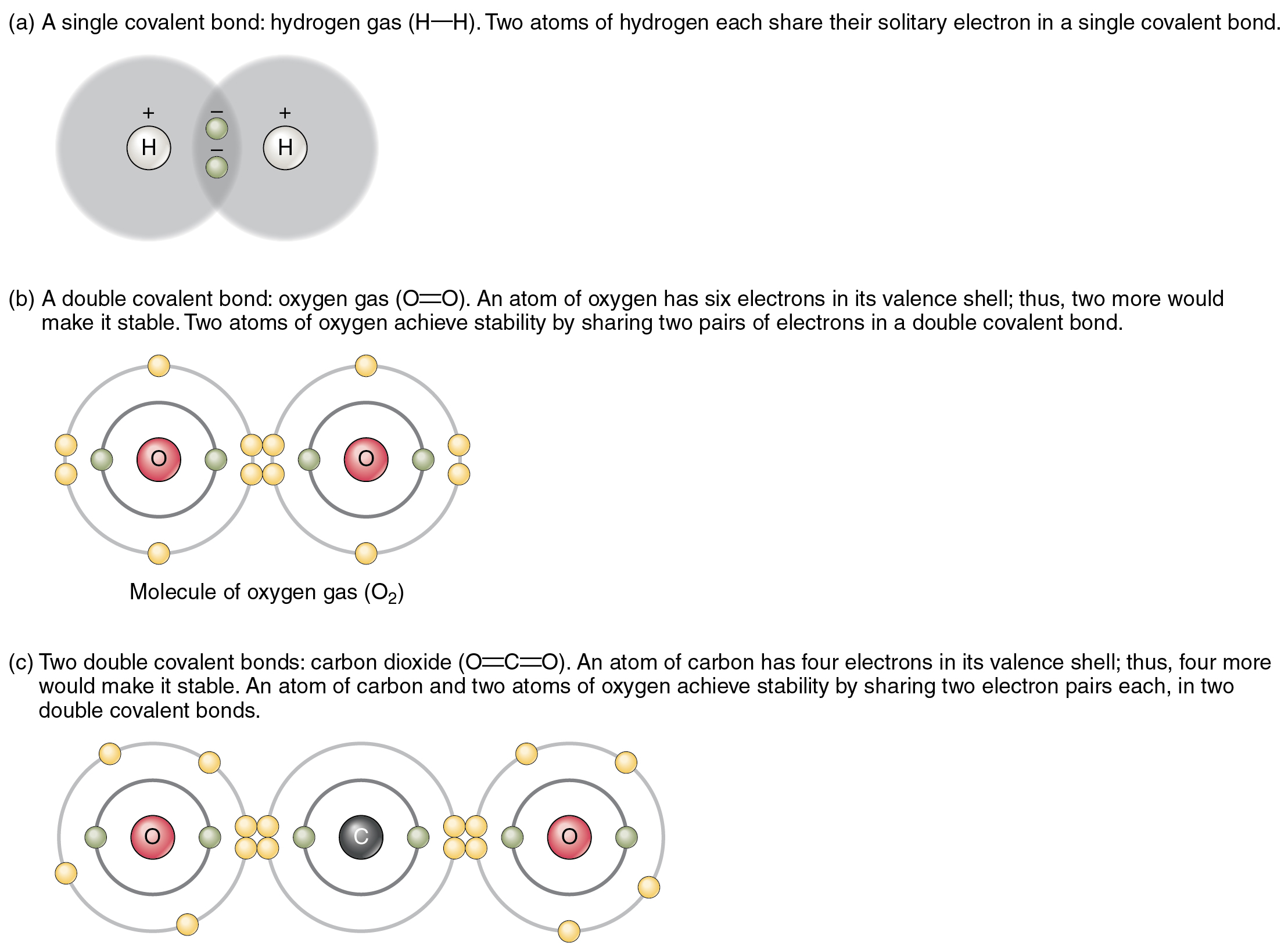Chemical Bonds Anatomy And Physiology