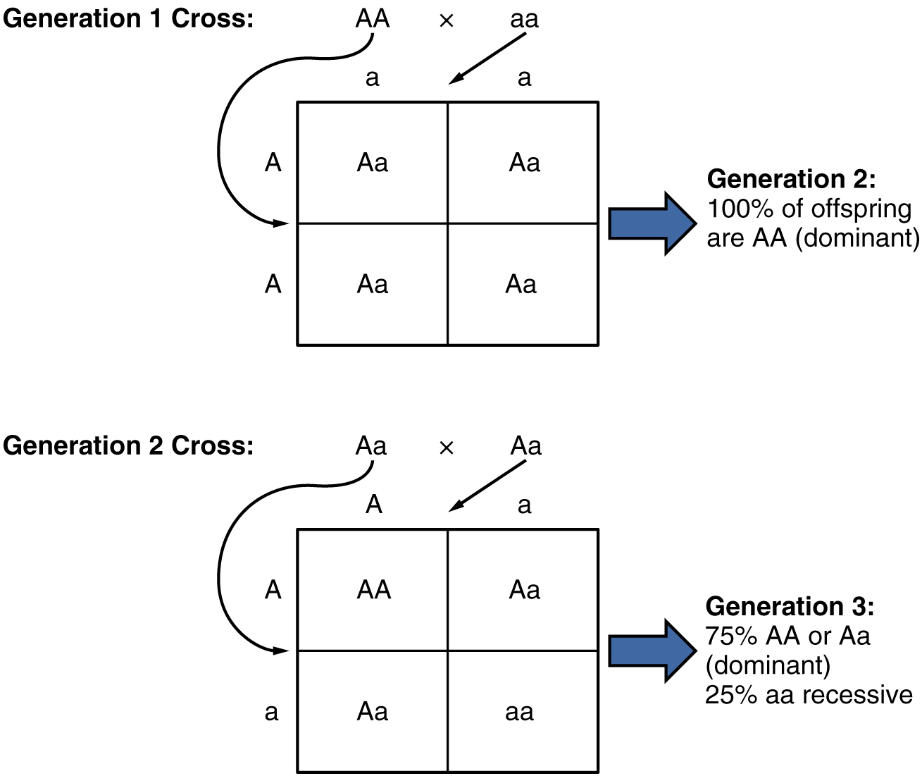 Patterns Of Inheritance Anatomy And Physiology