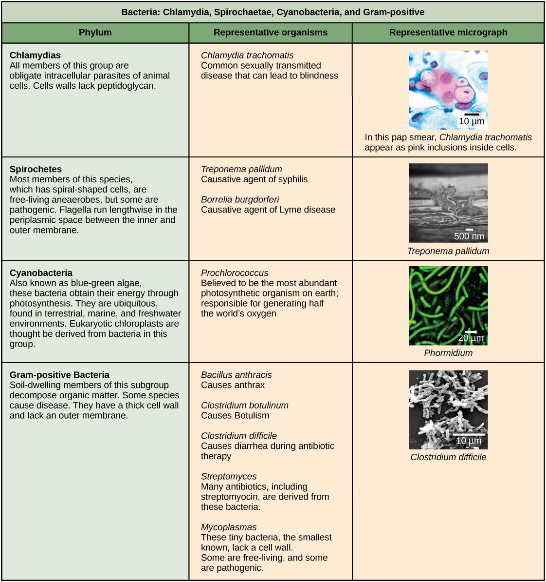 Structure Of Prokaryotes Biology