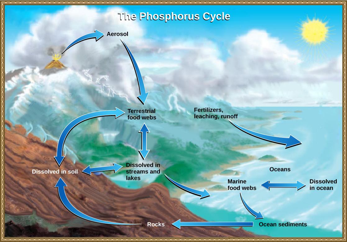 Biogeochemical Cycles Biology