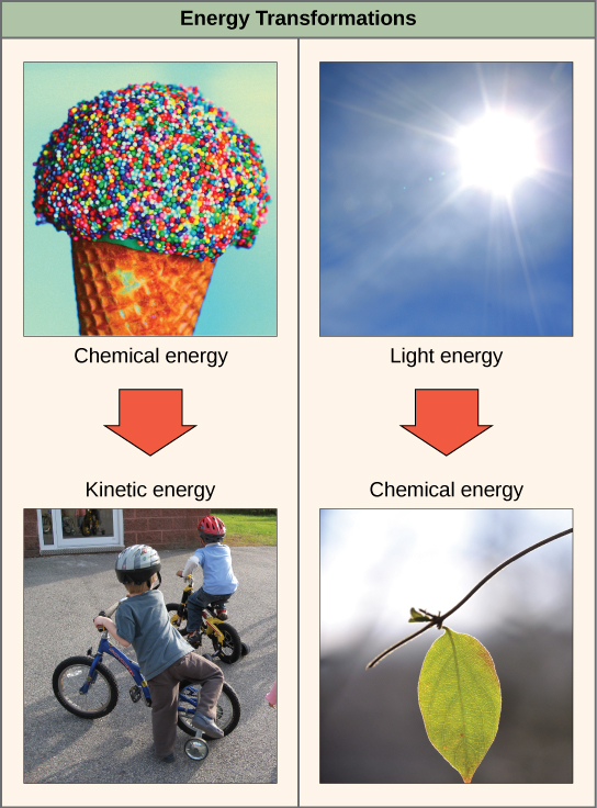 Examples Complex Sugars