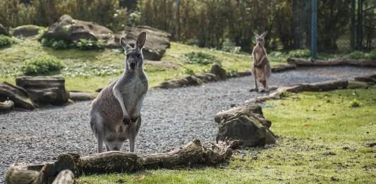 Managing stress while applying for an Australian visa