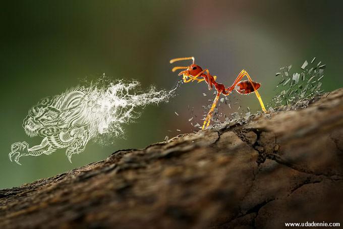 Tai Chi Ant by Uda Dennie