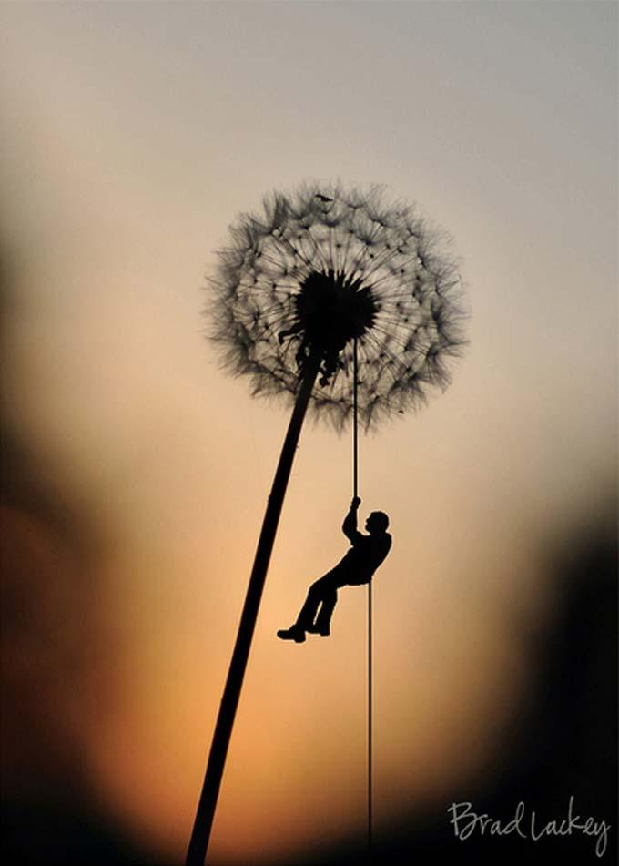 Giant Dandelion by Brad Lackey