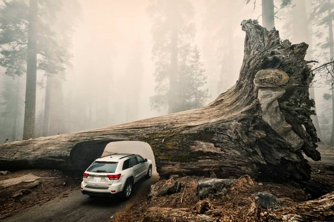 Sequoia Down by Allard Schager