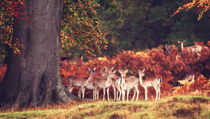 gaggle of girls by Mark Bridger