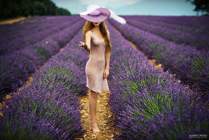 Lavender by Albert Pocej