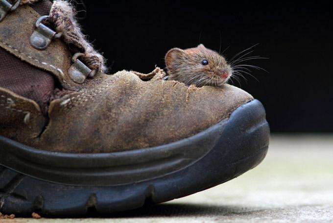 Big Foot by Simon Roy
