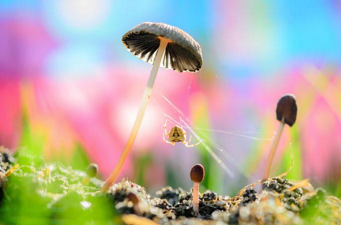 Mushroom Web by Raed Ammari
