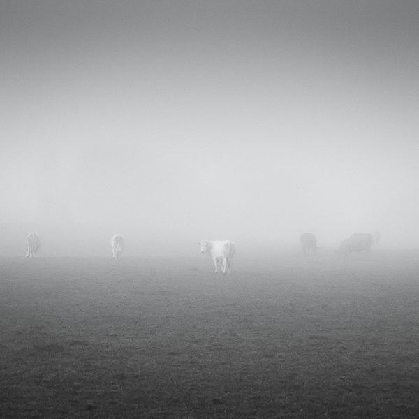 Minimal by Zoltan Bekefy