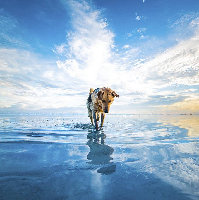 Dog by Cuba Gallery