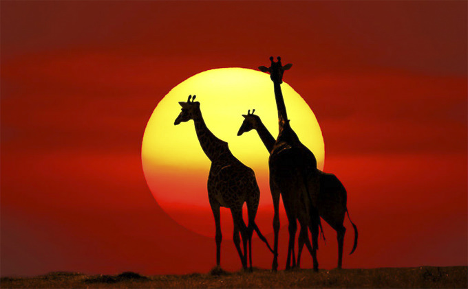 Kenya-Safari-by-PRASIT-CHANSAREEKORN