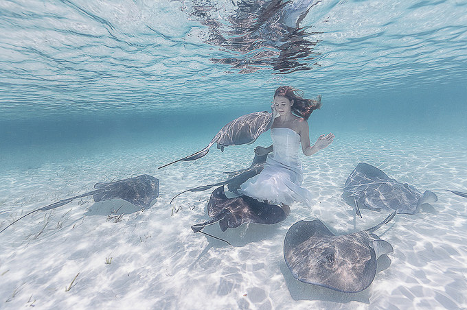 Stingrays-and-a-Girl-by-Elena-Kalis