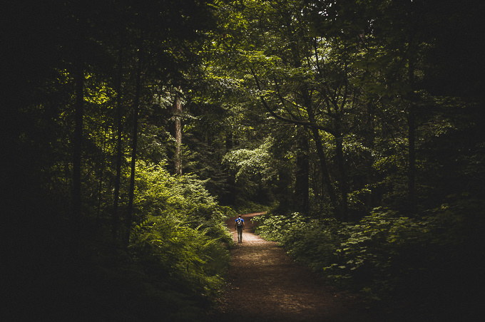 Into the Woods by Sam Maller
