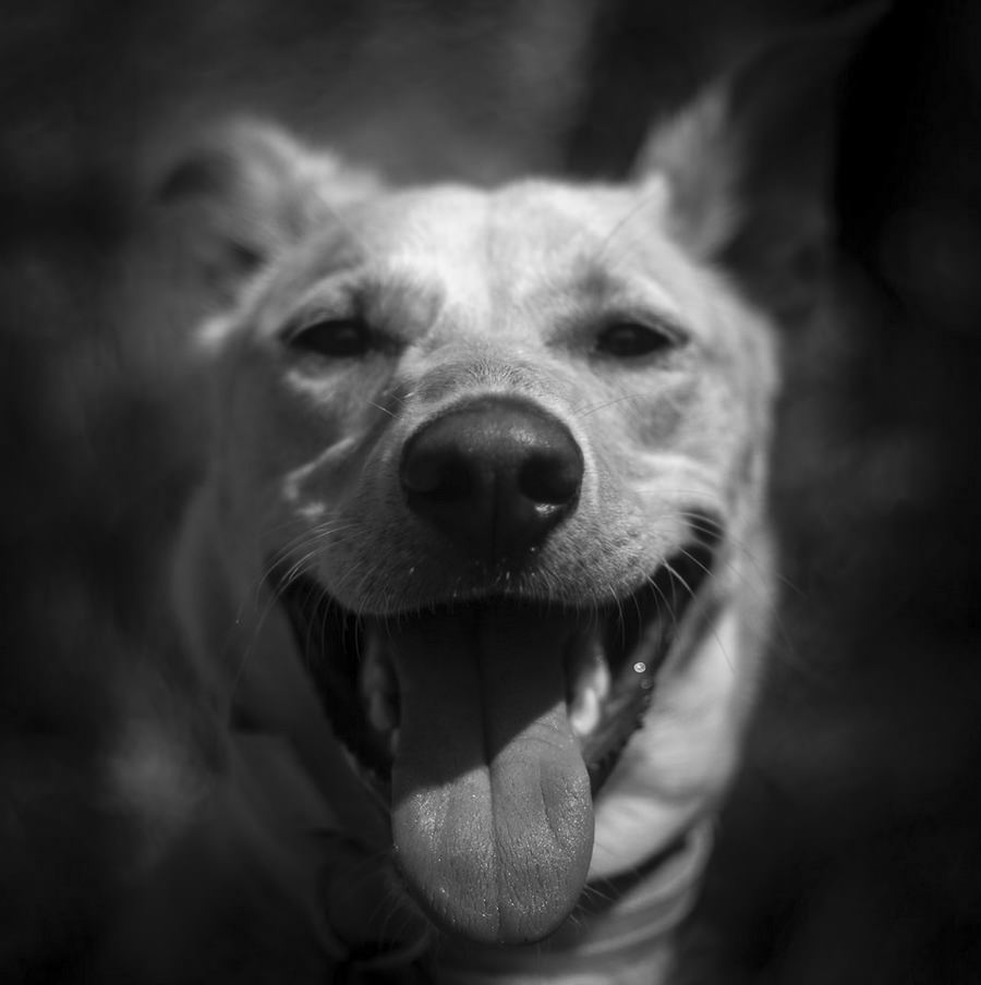 Myrtle Smiling by Joe Marshall