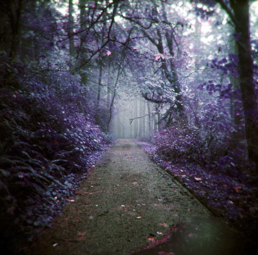 The fertile forests of our imagination by Zeb Andrews