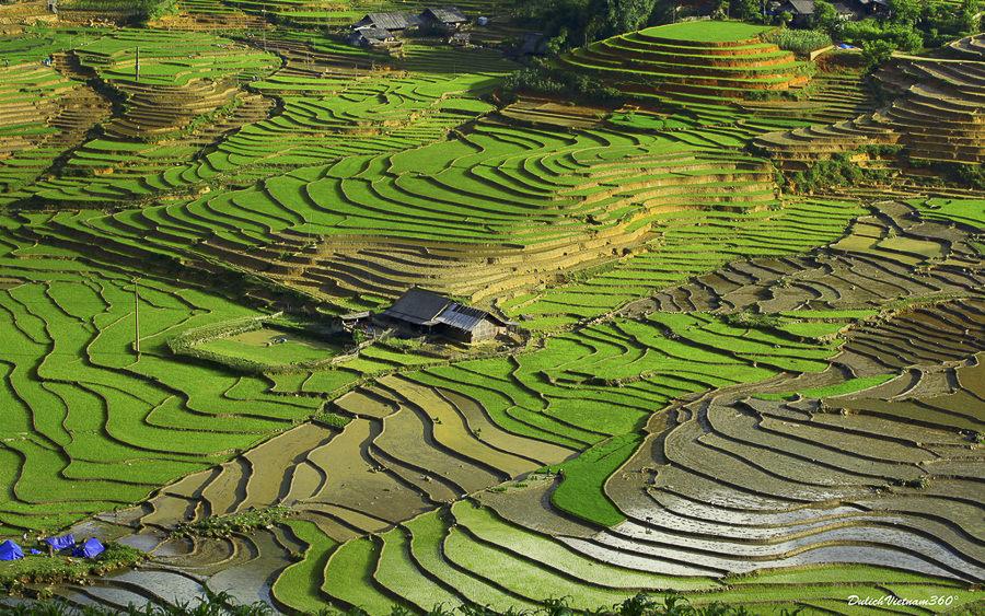 Green Paradise by Thai Hoa TRAN