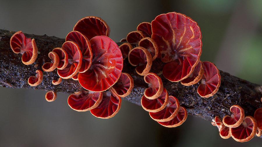Fungi by Steve Axford