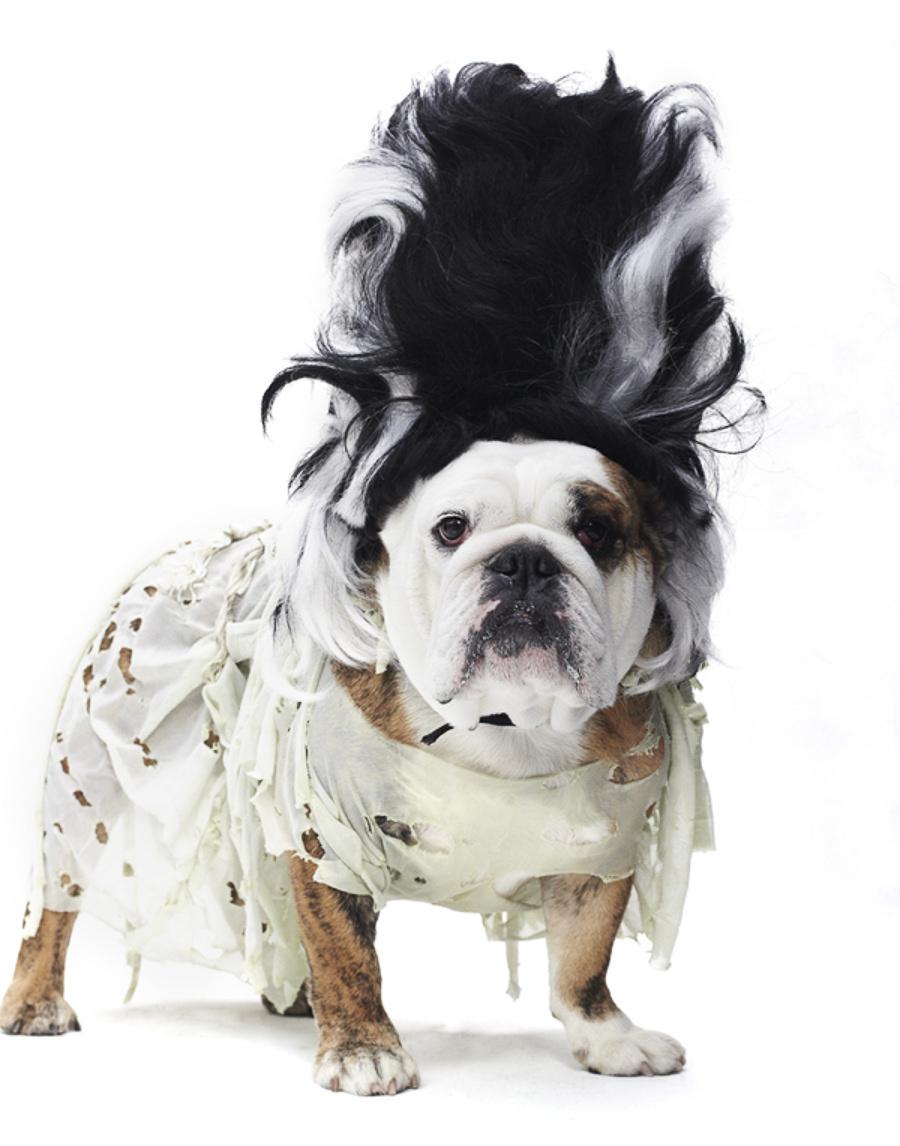 Halloween Dog Parade by Winnie Au
