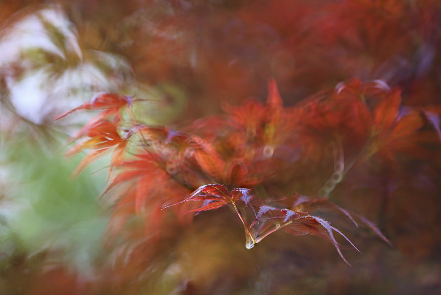 Taste of Autumn by Li Feng