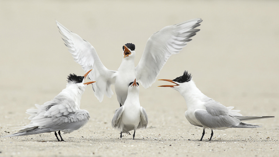 Tern Philharmonic Orchestra of Long Beach by bmse