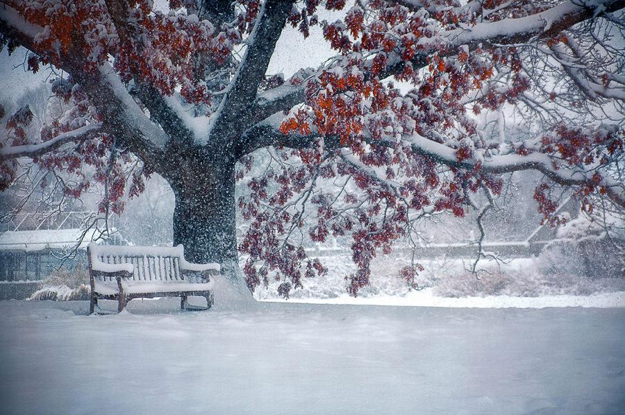 The Cold of Winter by Karen Hunnicutt