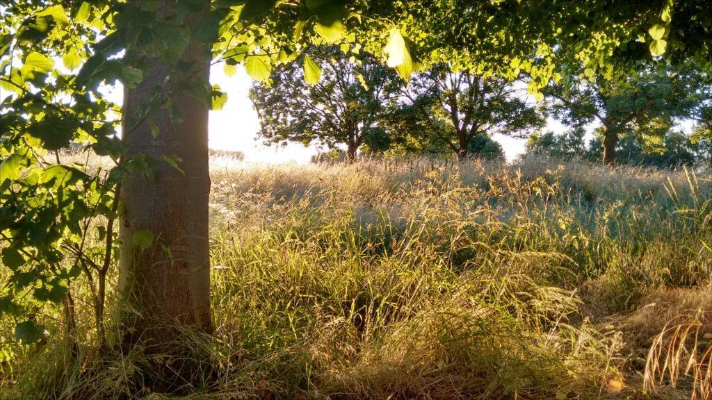 image of woods and field through sunset