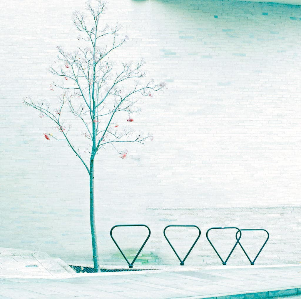 image of tree and bike stands