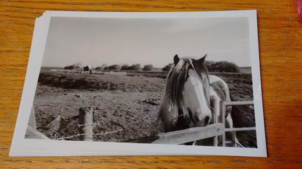 shoot_film_article_horse_phlogger taken on olympus om10 with delta 400 film