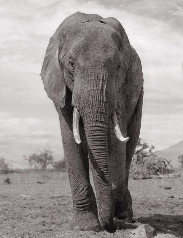 interviewing studio owner - elephant