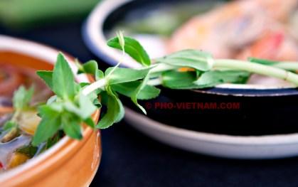 Rice paddy kruid (foto: Pho Vietnam © Kim Le Cao)
