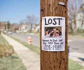 lost-pet-poster