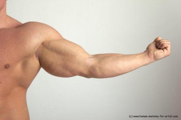 zoltan___arm__muscles_by_kristinkk-d31gz73
