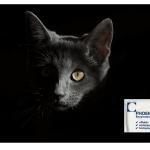 Katzenurin entfernen Phoenix Enzymreiniger
