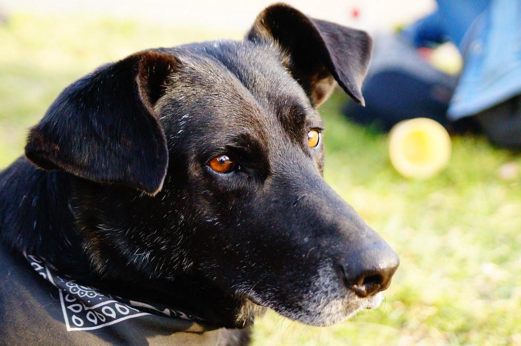 Matapacos - riot dog