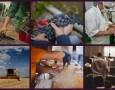 Food Grads Aims to Close Workforce Gap