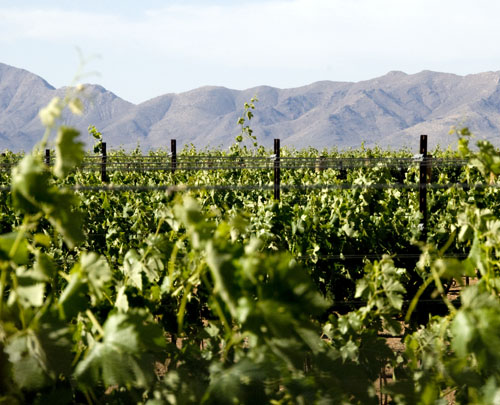 Zarpara Vineyards