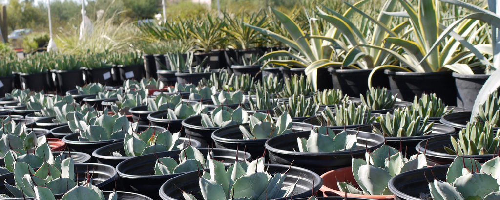 Chipotle partners with Desert Botanical Gardens for Annual Spring Plant Sale