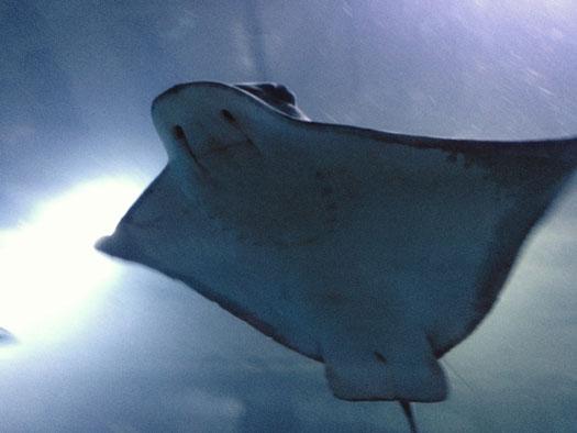 The Aquarium's sea creatures