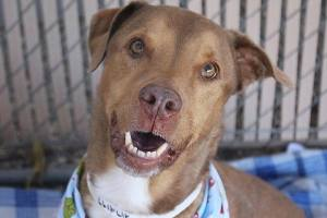Photo of a dog in a shelter