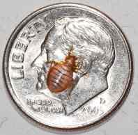 Knoxville pest control, Maryville pest control, bedbug, bed bug