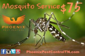 Mosquito promo