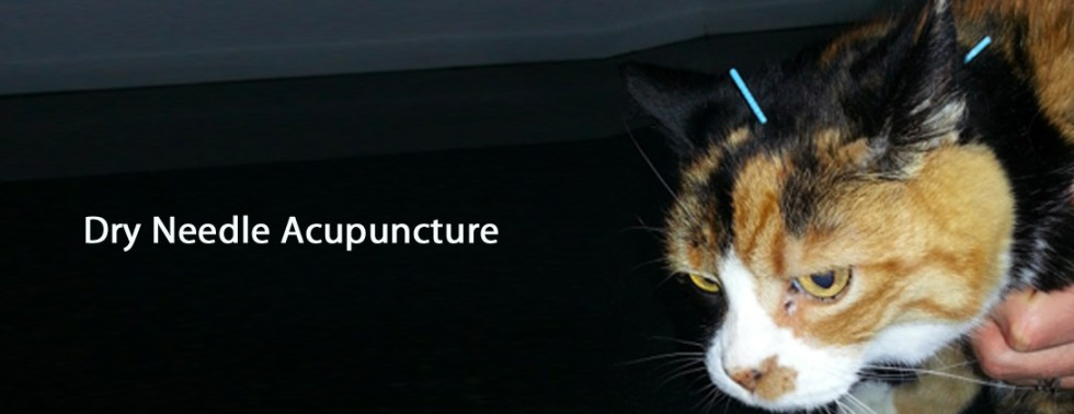 acupuncture, dry needle