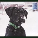 Cassie in the snow