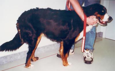 Phoenix Rising Veterinary Care, hip dysplasia