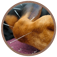 veterinary acupuncture